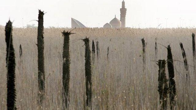 نخلهای سوخته در جنگ ایران و عراق، خوزستان