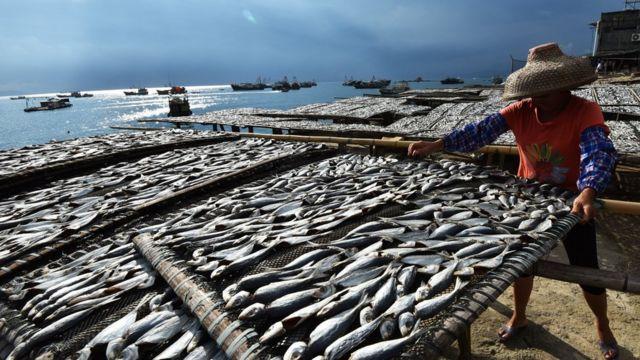 深圳一个晒渔场