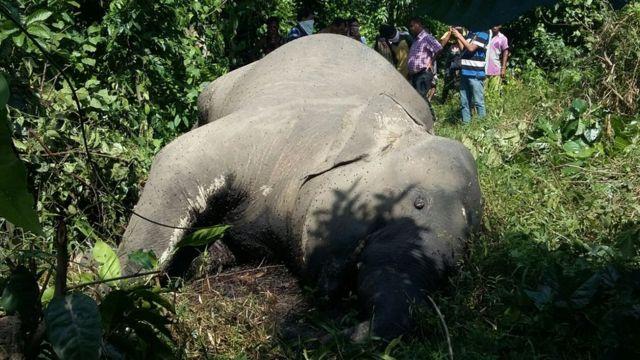 देवपहाड़ के जंगलों में मरा हुआ हाथी
