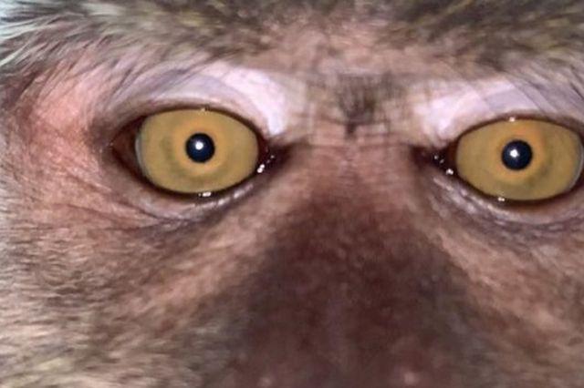 Monkey takes phone, selfies