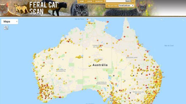 Reprodução do mapa de avistamento de gatos selvagens no site Feral Cat Scan