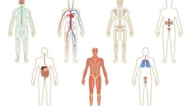 cuerpos