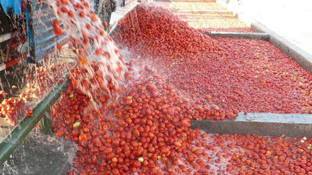 بنابر اعلام مرکز آمار قیمت رب گوجه فرنگی در آذر ماه امسال نسبت به پارسال ۲.۵ برابر شده است