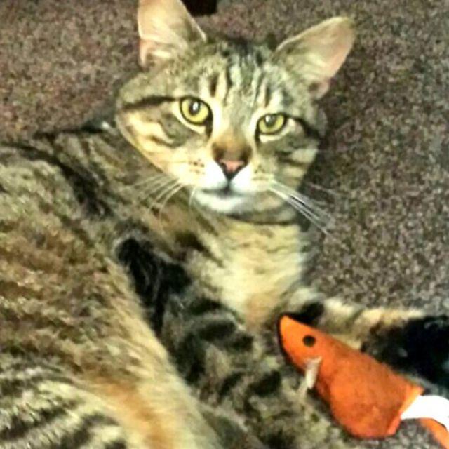 オリーとお気に入りのおもちゃ