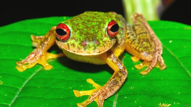 Killer frog disease 'part of Earth's sixth mass extinction'