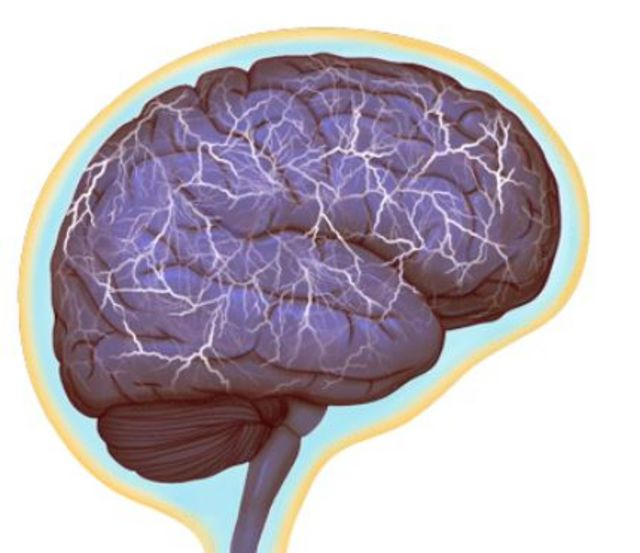 Vasos linfáticos en el cerebro