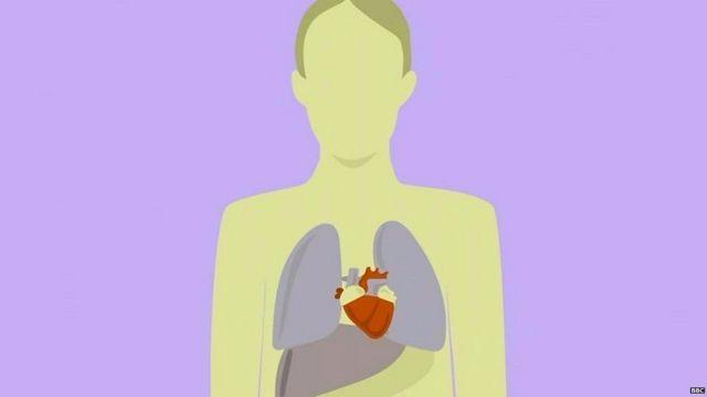 Heart Animated