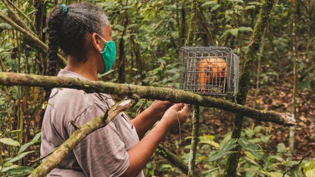 Cientista observa macaco capturado em armadilha