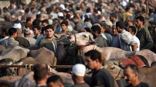 قربانی کے لیے جانوروں کا بازار