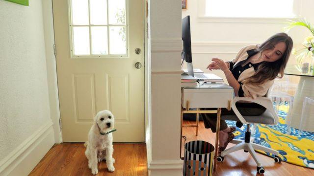 Trabajadora con su perro