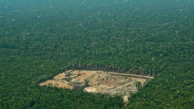 Вирубана ділянка серед тропічного лісу у Бразилії