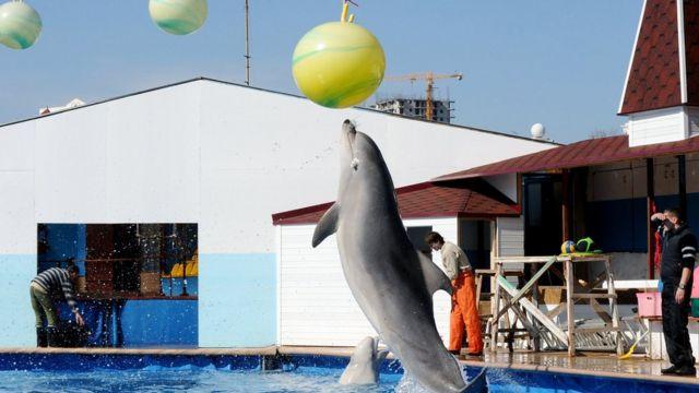 Дельфінарій