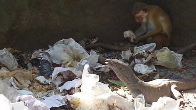 Rubbish at Yala safari park