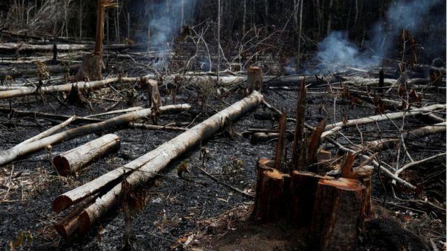 Troncos quemados en la región amazónica.
