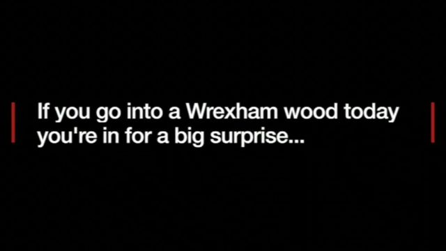 """Text: """"If you go into a Wrexham wood today you're in for a big surprise..."""""""