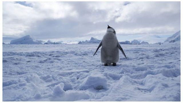 صورة القارة القطبية وطائر البطريق