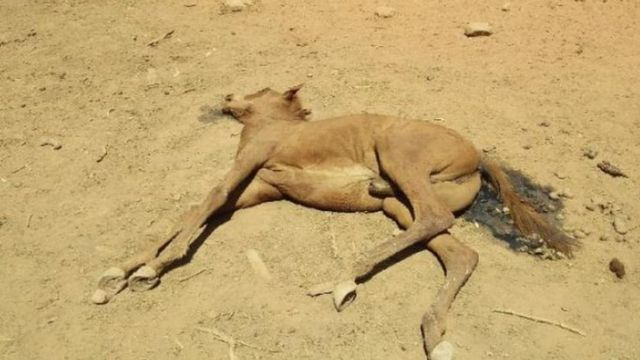 Corpo de cavalo encontrado morto em poço seco na cidade de Alice Springs, na Austrália