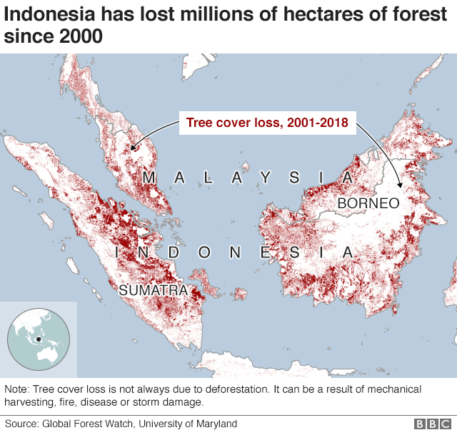 Map showing that Indonesia and the surrounding area has seen million of hectares of tree cover loss since 200