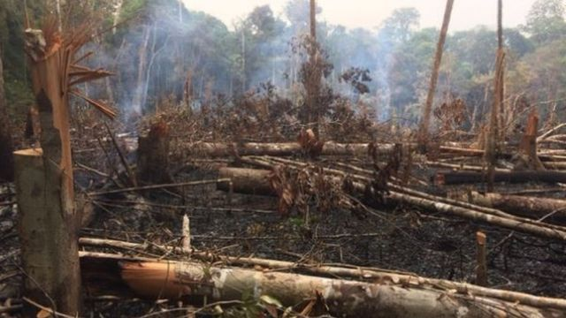 Floresta queimada