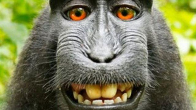 Monkey, Naruto di macaque