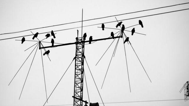 Aves posadas en una antena