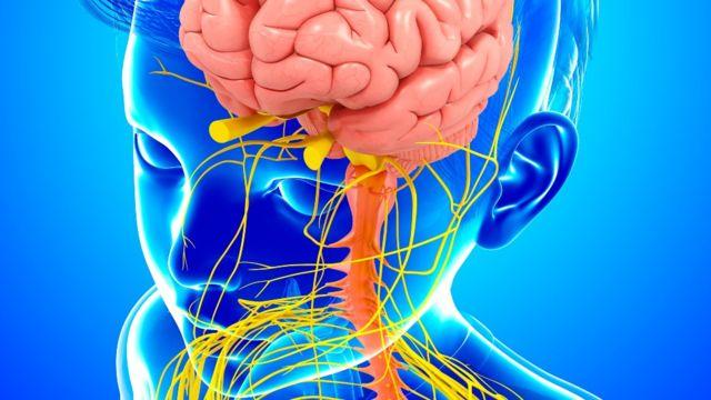 Ilustración del sistema nervioso de un niño