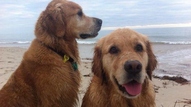 Vegan köpekler Darcy ve Emilie