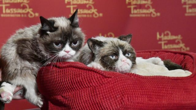 В Музее мадам Тюссо в Сан-Франциско есть даже восковое изображение знаменитой кошки, рядом с которым оригинал и позирует
