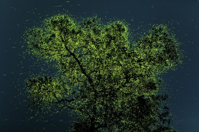A tree in India covered with glowing fireflies