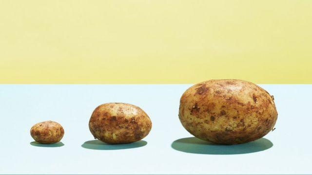 Три картофелины разного размера