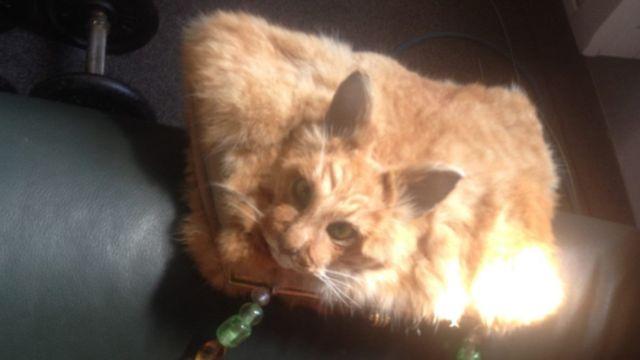 Tom, o gato transformado em bolsa