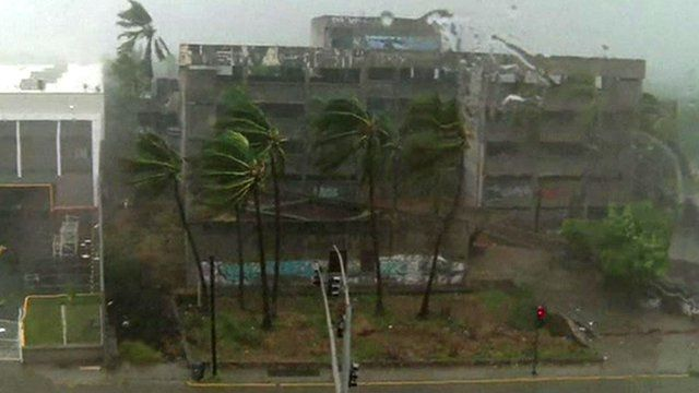Palm trees are battered by Hurricane Patricia