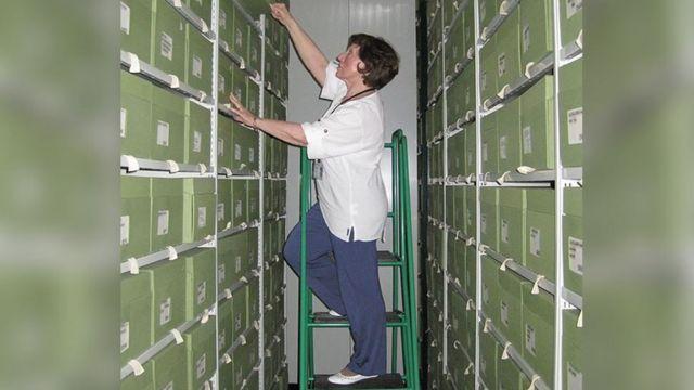 Patricia Wiltshire em escada entre pastas de arquivos