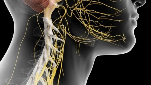 Ilustração do sistema nervoso