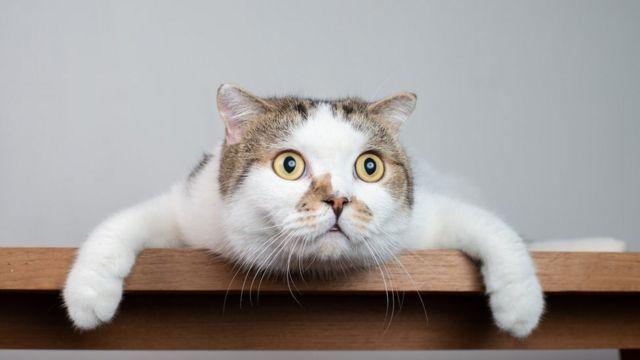 Por qué creemos que los gatos son menos cariñosos y amigables que los  perros? (y cuán cierto es eso) - BBC News Mundo