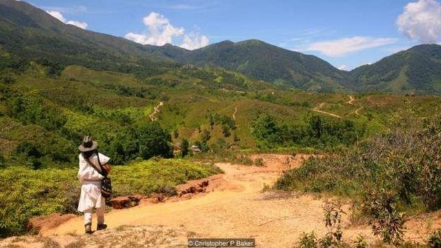 مردمان آروآکو، به همراه کوگیها و ویواها تنها بازماندگان تمدن باستانی و پیشرفته تایرونا به حساب میآیند