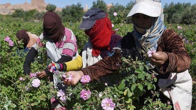 agriculture, maroc, ue