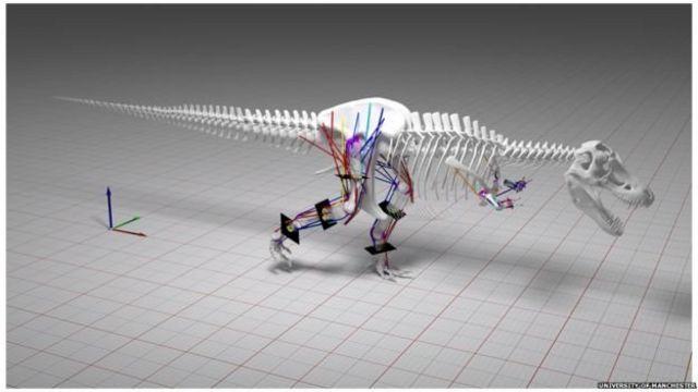 นักวิจัยใช้แบบจำลองคอมพิวเตอร์ที่ซับซ้อนคำนวณความเร็วของทีเร็กซ์