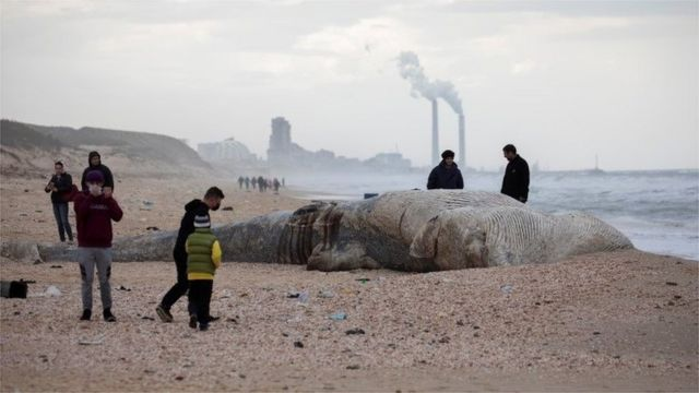 People stand near the body of a dead whale after it washed ashore from the Mediterranean near Nitzanim, Israel February 19, 2021