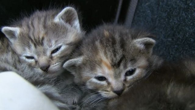 Kittens found in car due to be scrapped in Boston