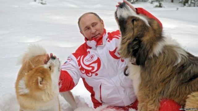 रशियाचे अध्यक्ष व्लादिमीर पुतिन कुत्र्यांशी खेळताना