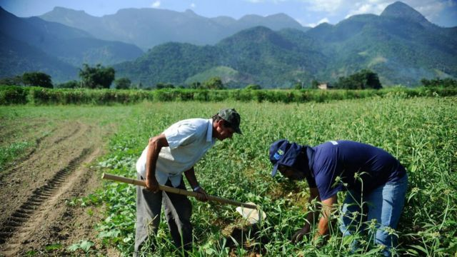 Dois homens trabalham na lavoura em meio a montanhas verdes e dia ensolarado