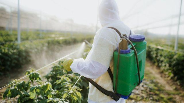 Homem aplicando agrotóxico em planta