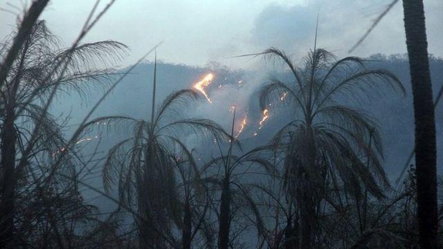 Área de floresta do Pantanal pega fogo