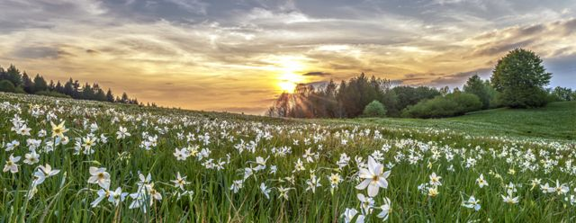 White Stars at Sunset by Gianluca Benini
