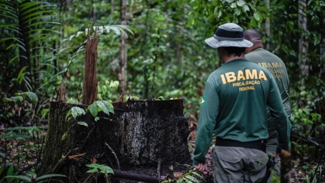 Ibama combate desmatamento ilegal na Terra Indígena Pirititi, Roraima