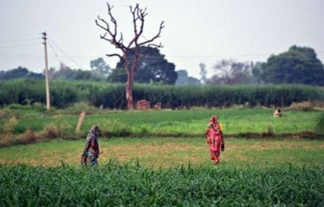 کھیت میں خواتین