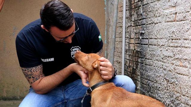 Matheus Laiola fazendocarinho em cão resgatado