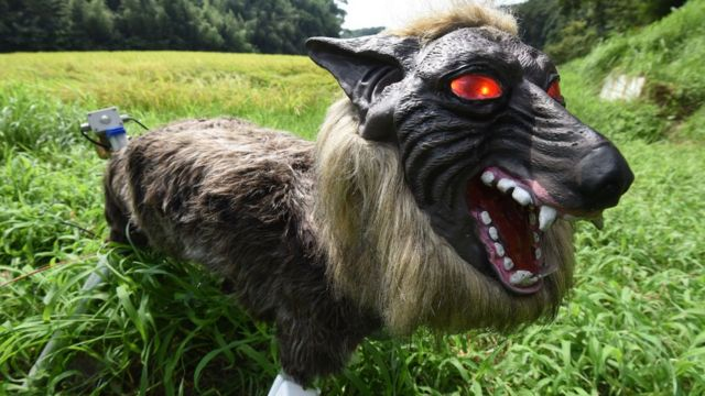 'Super Monster Wolf' a success in Japan farming trials