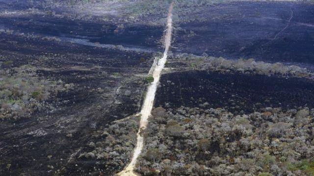 Área de Cerrado recém-incendiada